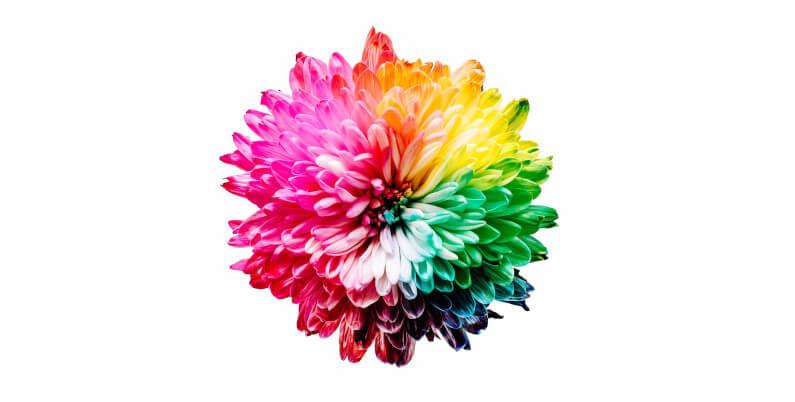 Hochsensibel und vielbegabt: Blüte in verschiedenen Farben
