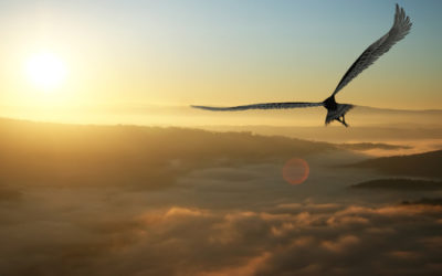Hochsensibel im Beruf in 2020: Meine persönliche Transformation